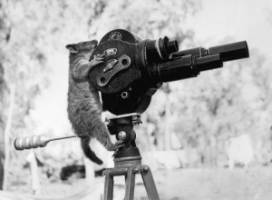 Opossum-with-video-camera
